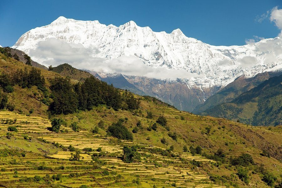 Rice field and snowy Himalayas mountain in Nepal